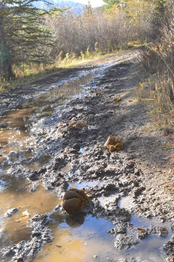 horse poop on the trail