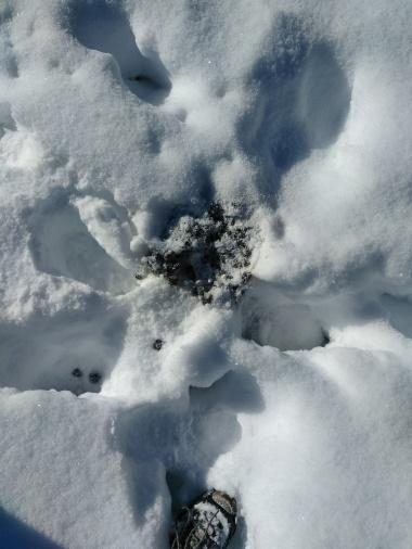 elk droppings!